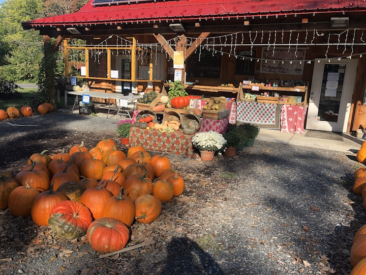 A small farm store at the back of photo, with bottom of bright red roof overhanging a small terrace with display of bottled and packaged goods; foreground shows a gray graveled area with displays pots of flowering chrysantemums and tipped-sideways baskets of winter squashes on cloth-covered tiers of tables; near foreground shows a couple dozen medium and large pumpkins on ground at the middle and along either far side of photo