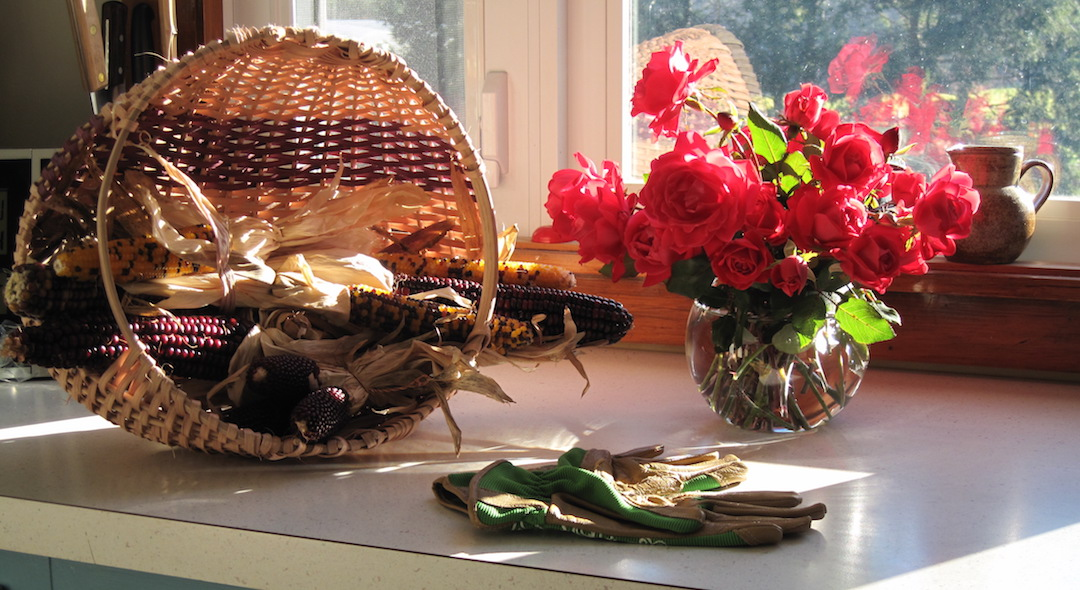 photo of red roses in a round glass vase, a pair of green gardening gloves, and a rustic basket with dried corncobs on a kitchen counter, with a window in background