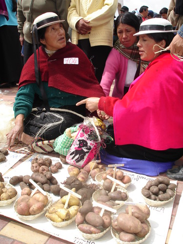 Scene from Ecuadorian market, with two market women seated on ground, wearing white narrow-brimmed hats and red shawls, behind a mat displaying ten or more different types of potato; market-goers in background stand behind the woman, while another woman sits or kneels behind the two