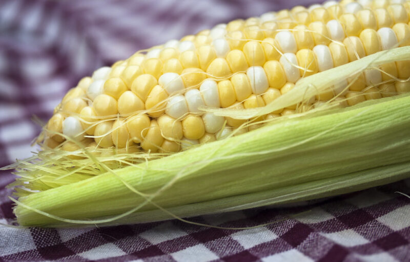 Corn. Photo showing top half of a partly-husked ear of corn, resting horizontally on a purple and white-striped cloth