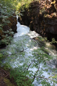 A deep rocky chasm with a white-water river rushing through it; trees growing atop the rocky banks, with some green leafy tree branches in foreground extending over the water.