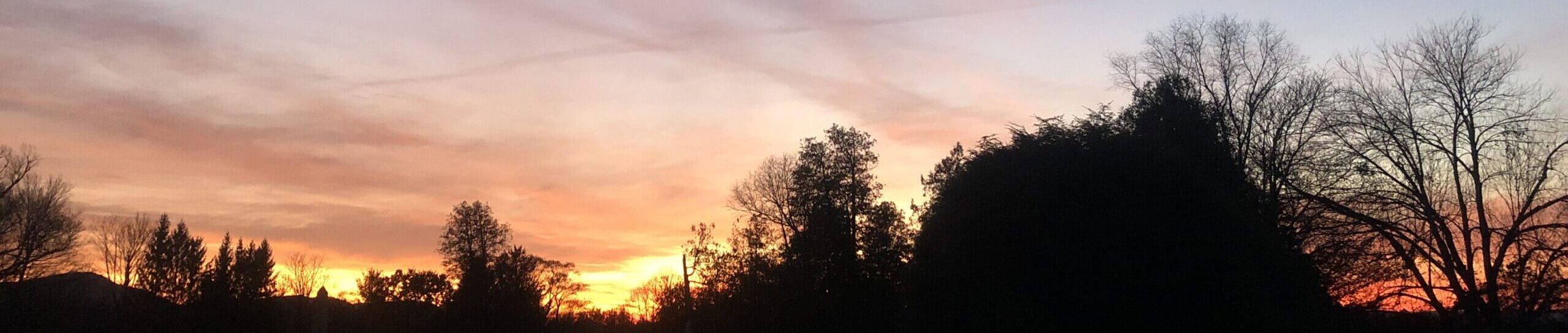 Sunset showing orange-yellow above black silhouettes of trees, shading up to purply-pink wispy clouds over darkening blue sky background