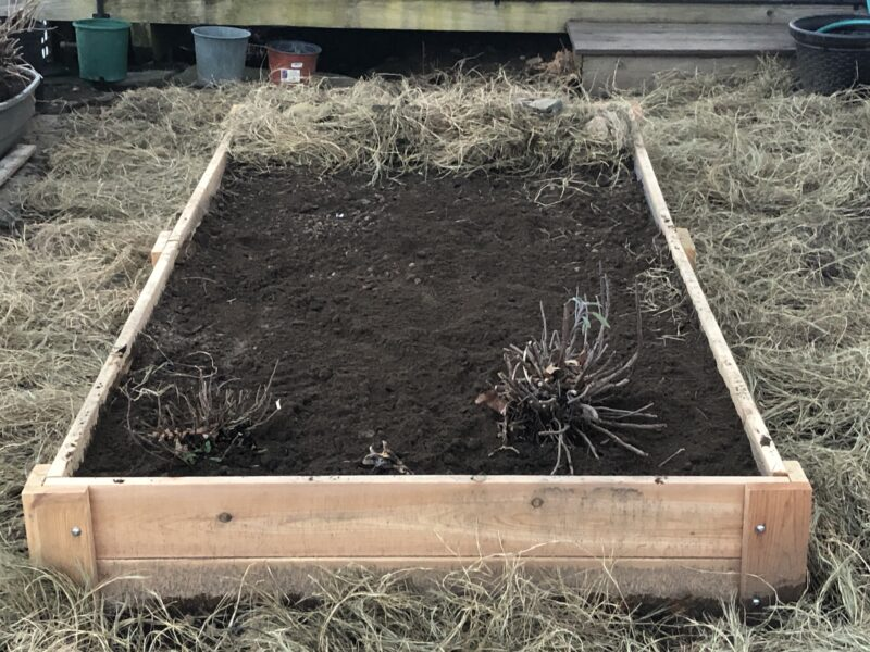 A raised bed filled with soil, shown lengthwise with a couple of stumps of transplanted herbs in the near end, and an area covered with straw at the other end, the entire bed surrounded by more straw