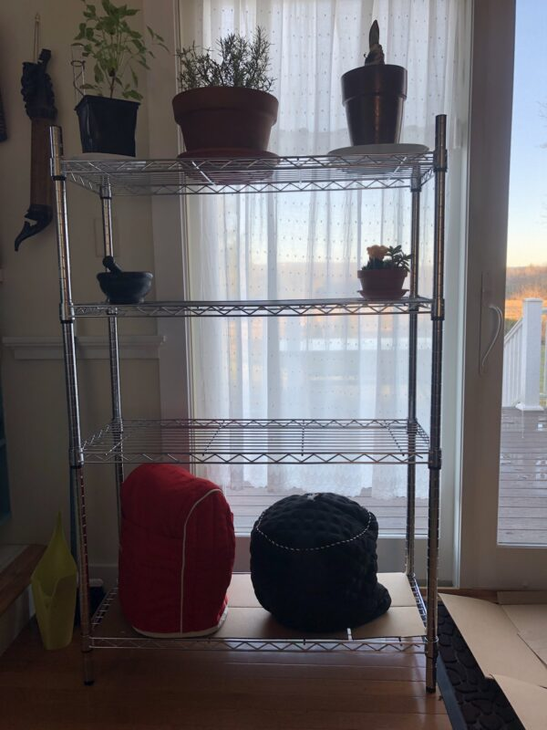 a metal shelf unit in front of a floor-to-ceiling window; four shelves, with three plants on the top shelf, one plant and a small object on the second shelf down, third shelf empty and two small kitchen appliances, one with red cover and one with black, on the bottom shelf