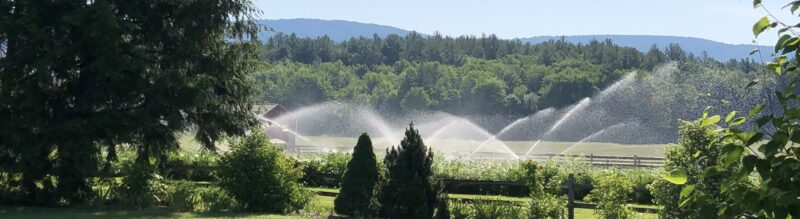 Irrigation sprinklers at work behind trees and shrubs in foreground; green hills visible in background