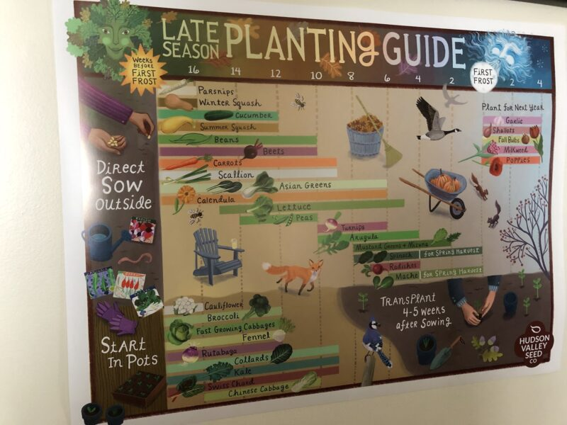"""Colorful """"Late Season Planting Guide"""" poster in graphic form with numbers running in countdown along top: 16, 14, 12, etc... to first frost, followed by 2 and 4 after first frost; to the left, sections are marked out for direct sowing outdoors or for starting in pots. Various vegetables and herbs (indicated with small pictures and names written in script) are represented in colored bars in the body of the graph, placed according to suitable planting times; areas in graph without bars are vividly illustrated with pictures of wildlife and fall tasks."""